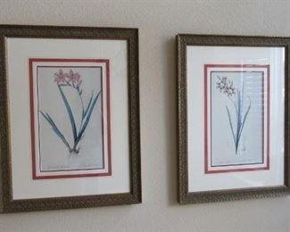 lovely framed botanic prints