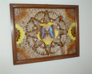Antique butterfly wing picture.