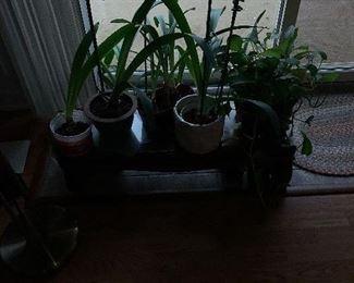 Plants $10-20