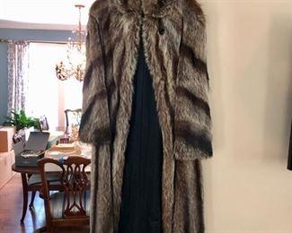 Full. length raccoon