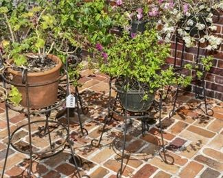 194. Set of 4 Four Wrought Iron Scroll Work Plant Stands