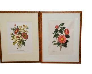 230. Pair Framed Decorative Floral Prints