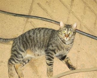 BARN CAT NOT FOR SALE.