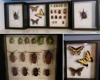 Unique Insect Taxidermy