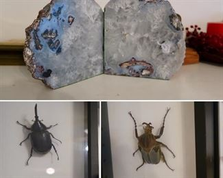 Stone Bookends/Insect Taxidermy