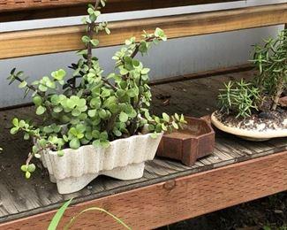 plants, cool vintage pots
