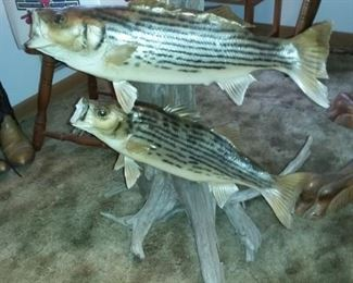 Fish Taxidermy, Fishing Rods & Tackle Boxes