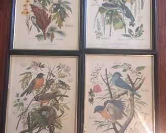 Singer bird prints