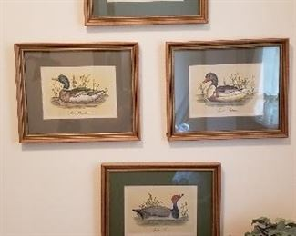 Duck Artwork and Prints