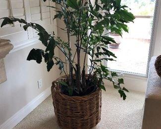 Kreiss Basket with Fishtail Palm #2 https://ctbids.com/#!/description/share/165160