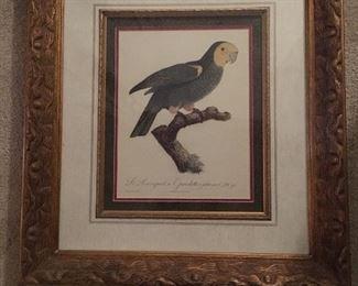 Parrot lithograph