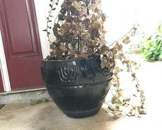 Ceramic planter and plant