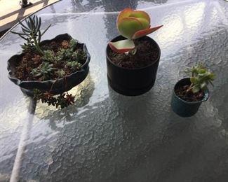 3 Planters With Succulents https://ctbids.com/#!/description/share/171546