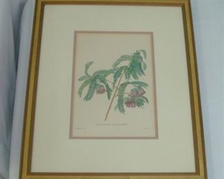 Large Redoute Framed Botanical