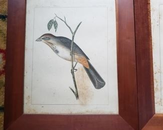 Bird prints in wood frames
