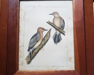 Woodpeckers, wood frame