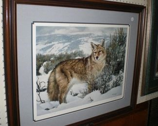 """Between the shadows- Coyote"" by Nancy Glazier #738/750 signed proof"