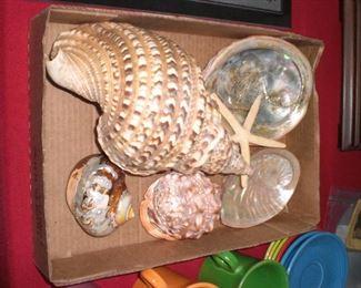 nice collection of sea shells
