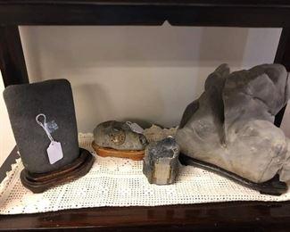 Rocks fossils and petrified wood