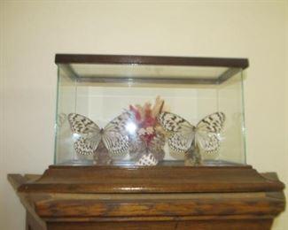 Decorator butterflies