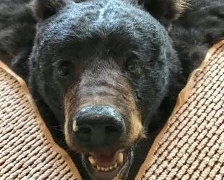 Bear Skin Rug - Barry Peterson Taxidermy