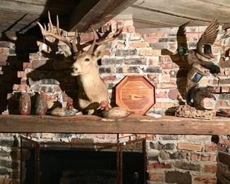 Mounted Deer Head and Multiple Taxidermy Pieces