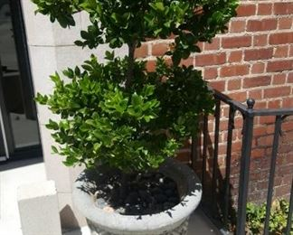 Planter with tree...