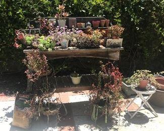 Succulents, Succulents, Succulents, Wood table too!