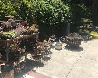 Succulents, Fire Pit