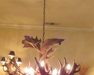 Shiras moose antler chandelier