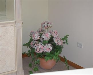 Short Plant