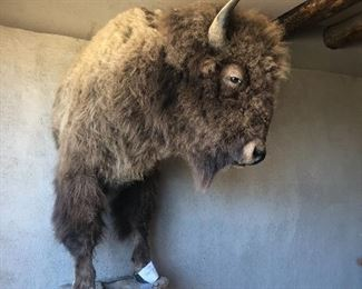 Buffalo mount.  We are taking bids.  Contact us to place a bid. Current bid is $500.