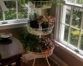 plant holders and plants