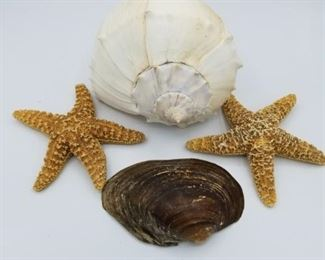starfish and seasehells