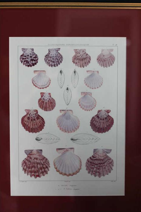 One of four beautiful seashell prints.  Nice seashell collection too!