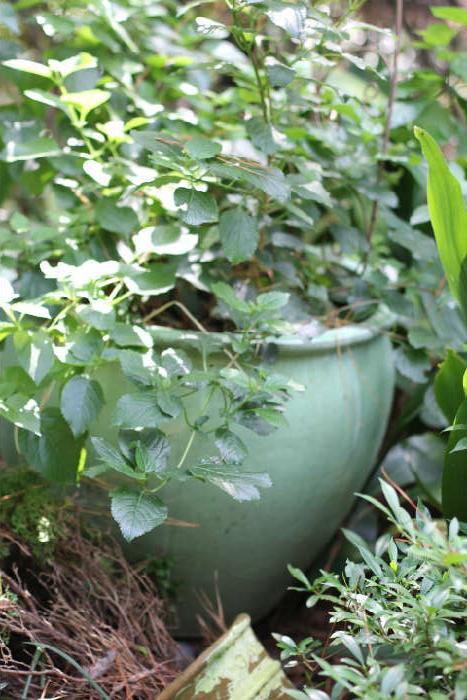 Many specimen-sized plants in pots on the grounds