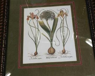 tbs framed iris and allium bulb print