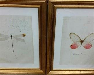 tbs dragonfly and moth framed pair