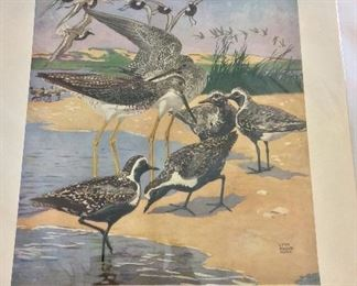 Dupont Poster, Shorebirds.