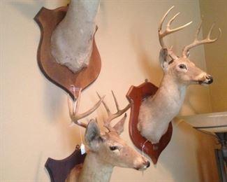 Three of six deer mounts