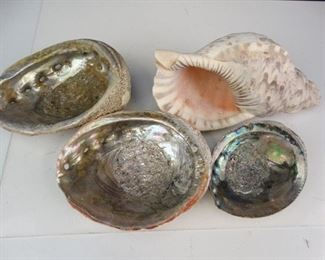 Oyster Conch Shells