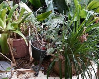 more plants...