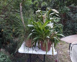 more plants..