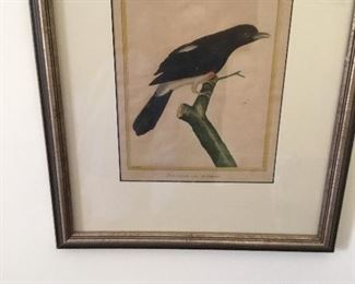A huge collection of antique bird prints:  both framed and unframed.