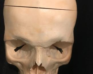 Yep, actual human skull. Our client is a retired dentist and the graduating class from Baylor in the 80's was the last to receive an actual human skull.