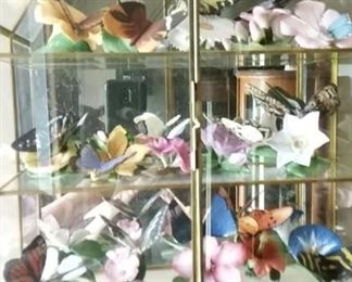 Beautiful Collection of  Butterflies  Glass Display Case