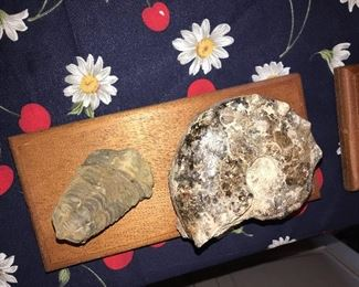 TAILOBITE FOSSIL FROM MOROCCO
