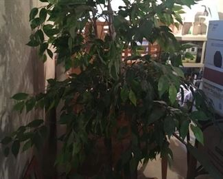 A sale would not be complete without a faux ficus!