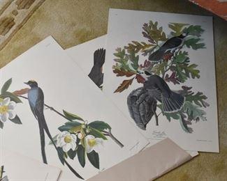 Folio of Reproduction Audubon Prints