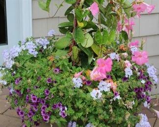Planted Garden Pot